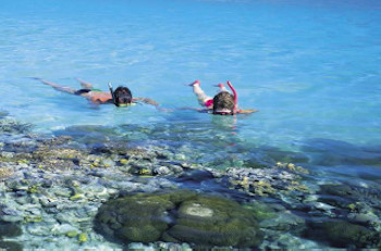 Snorkeling near the University of Queensland
